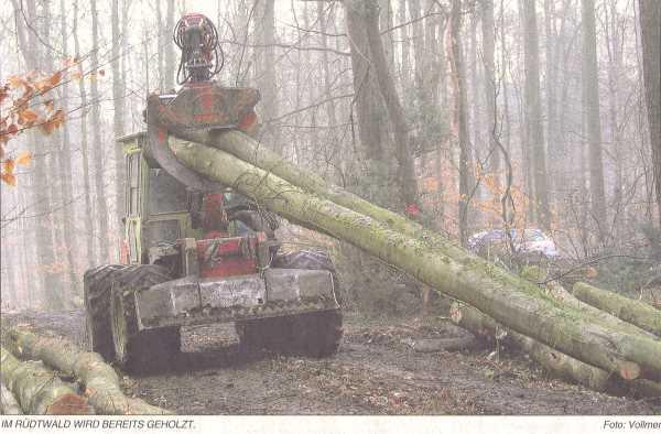 Durchforstung im Rüdtwald
